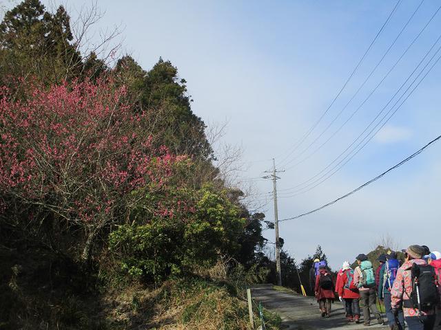 画像1: 2月12日に岡田ガイドのコースで千葉の 御殿山 へ行ってきました♪