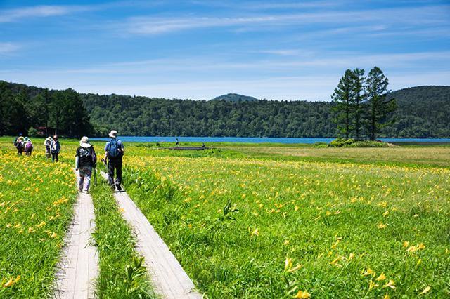画像: 尾瀬の木道をハイキング