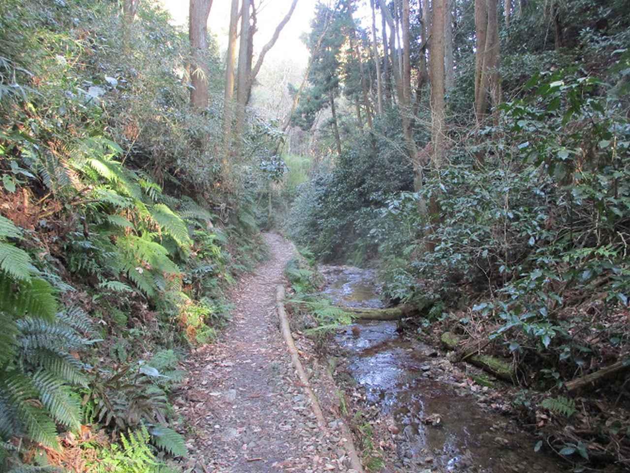 画像6: 3月の山旅会 大楠山から衣笠城跡 ツアーの下見に行ってきました!