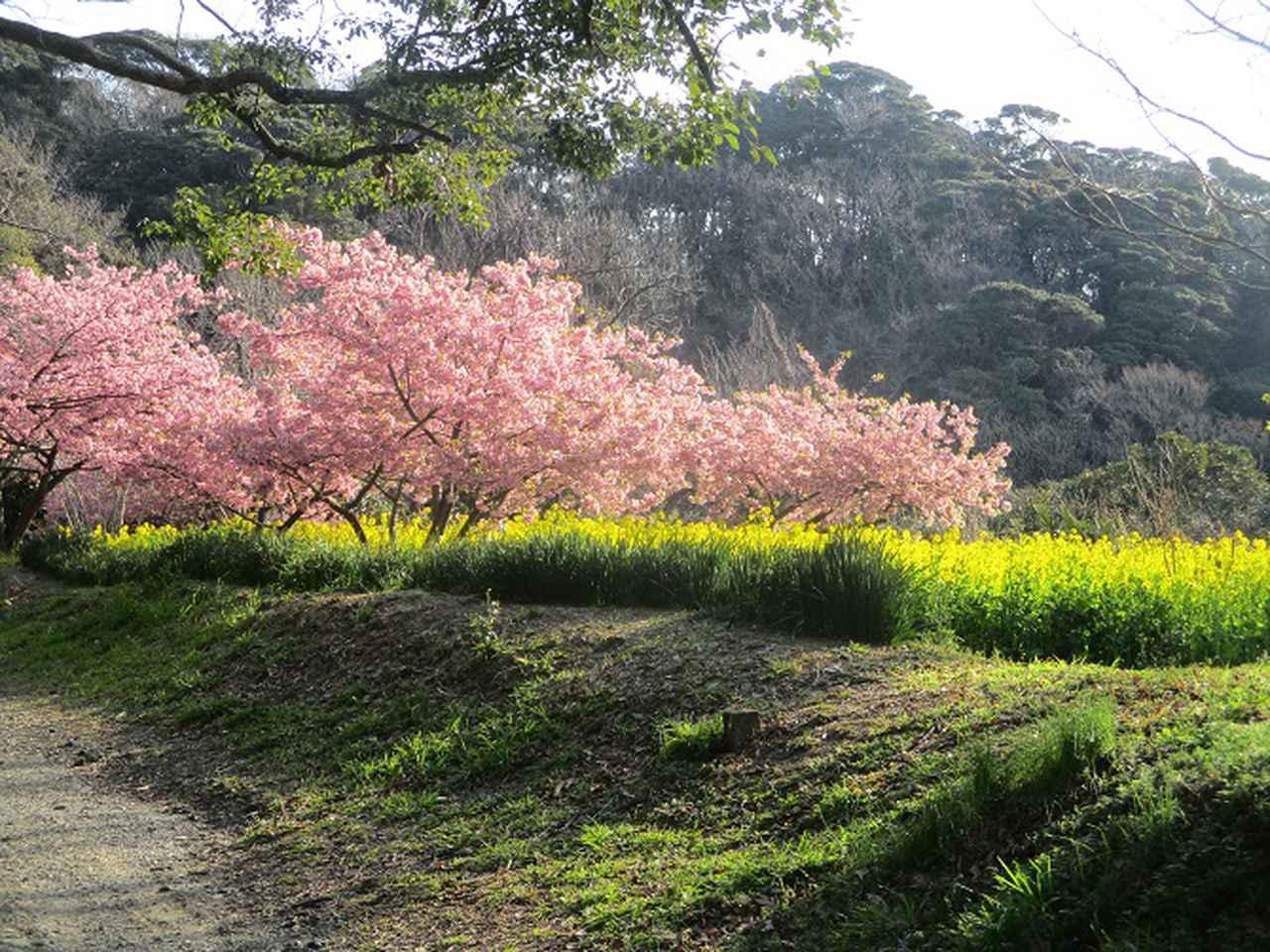 画像2: 3月の山旅会 大楠山から衣笠城跡 ツアーの下見に行ってきました!
