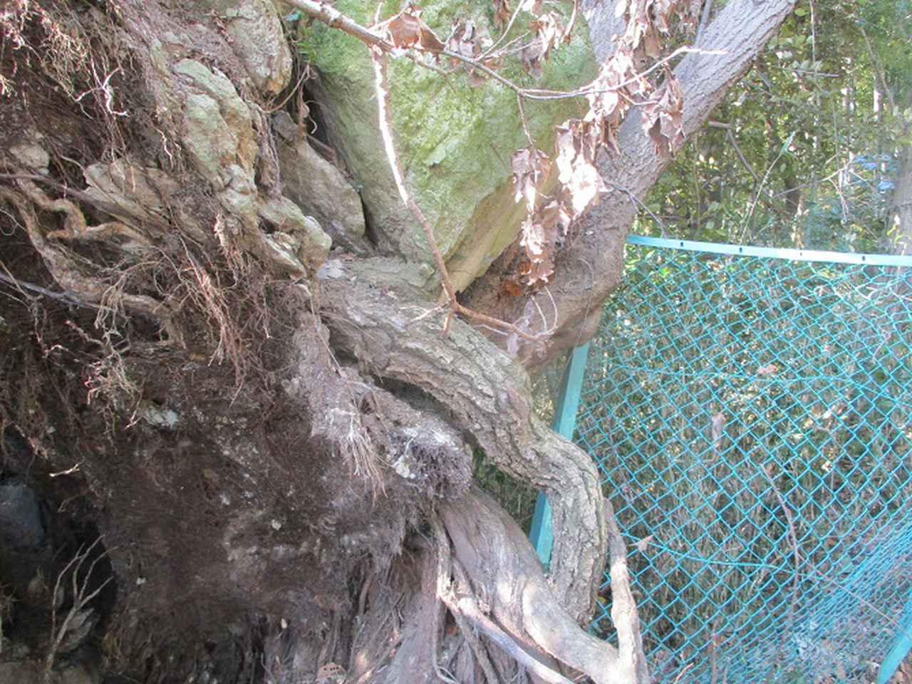 画像10: 3月の山旅会 大楠山から衣笠城跡 ツアーの下見に行ってきました!