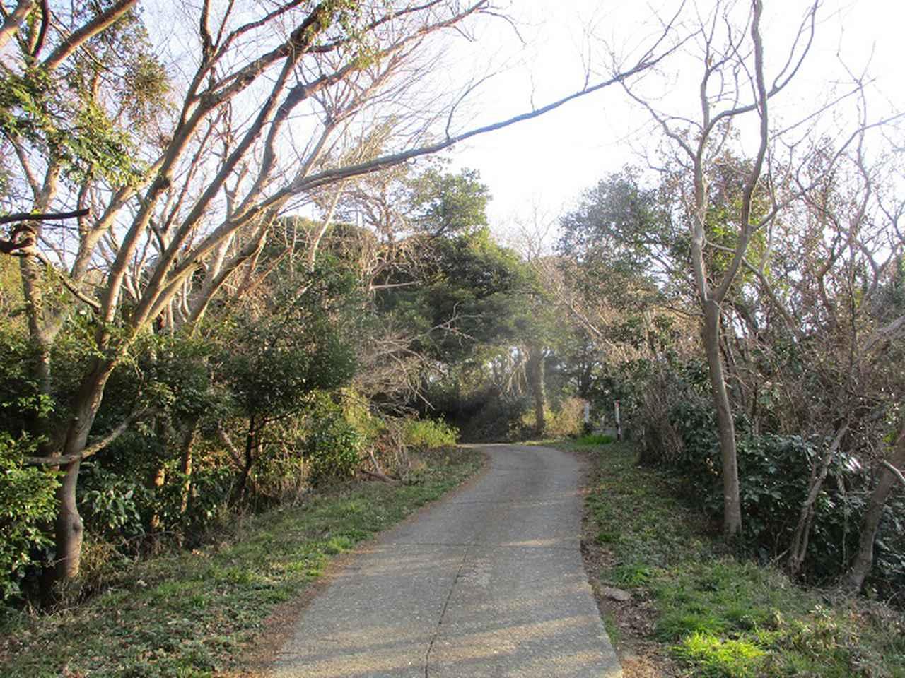 画像1: 3月の山旅会 大楠山から衣笠城跡 ツアーの下見に行ってきました!