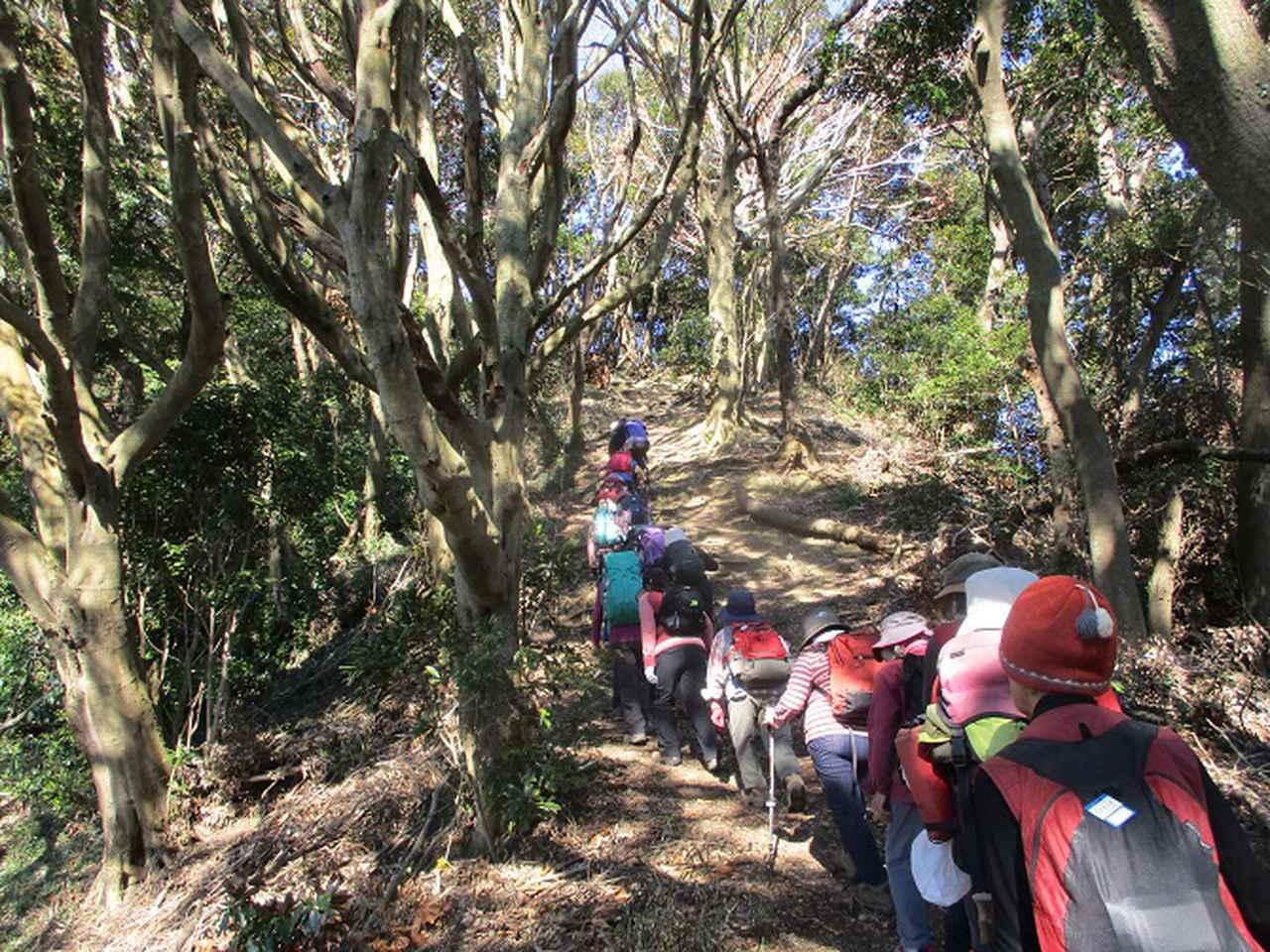 画像3: 2月18日に岡田ガイドのコースで 三浦富士 へ行って来ました♪