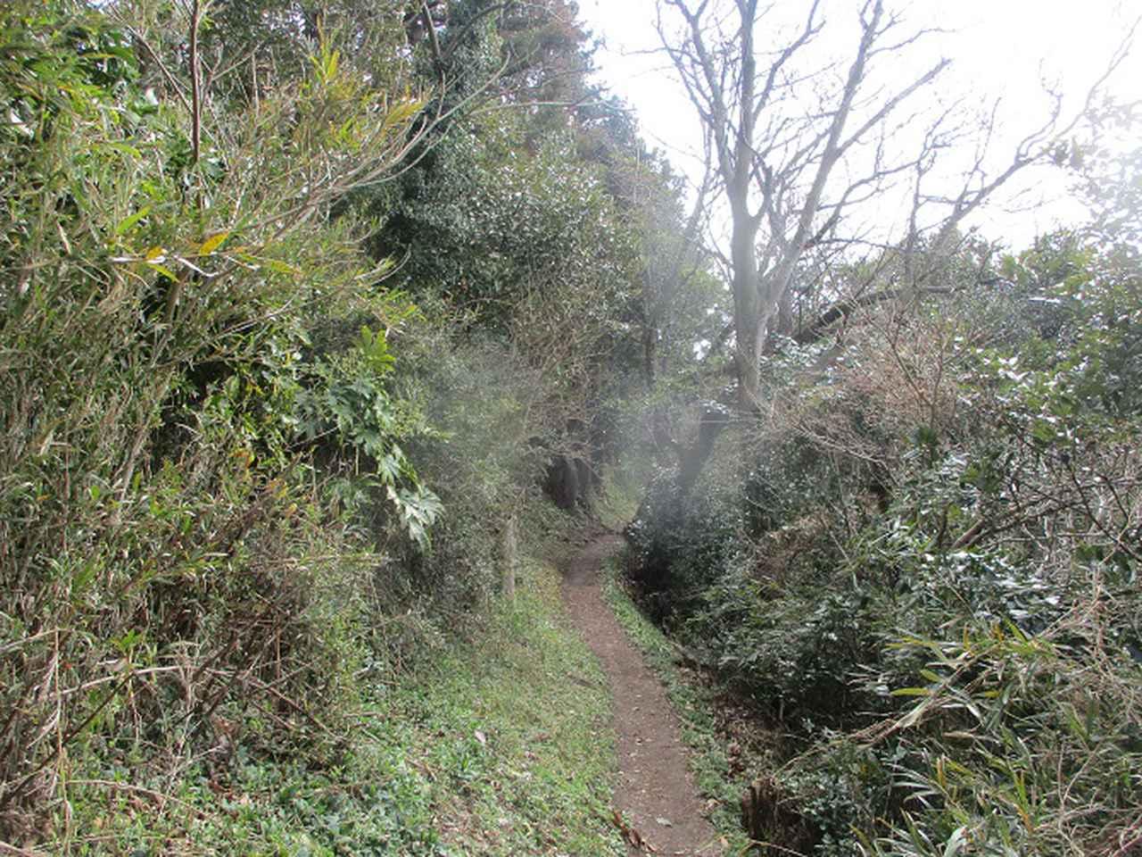 画像4: 2月22日に山旅会 仙元山から茅塚 ツアーに行ってきました!