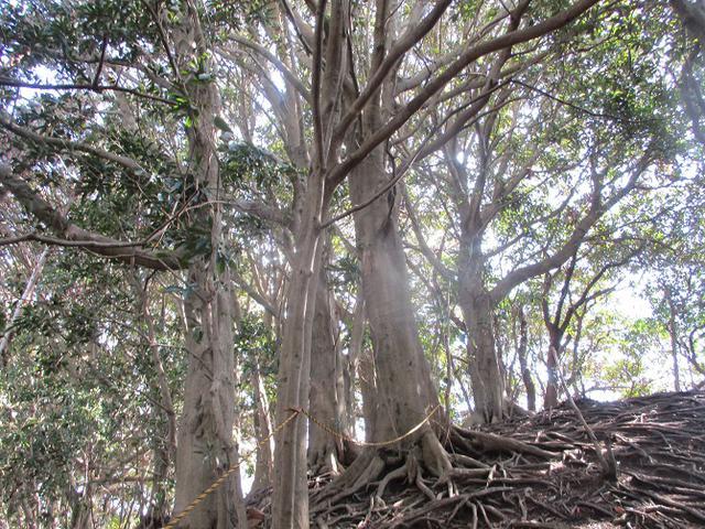 画像7: 2月22日に山旅会 仙元山から茅塚 ツアーに行ってきました!