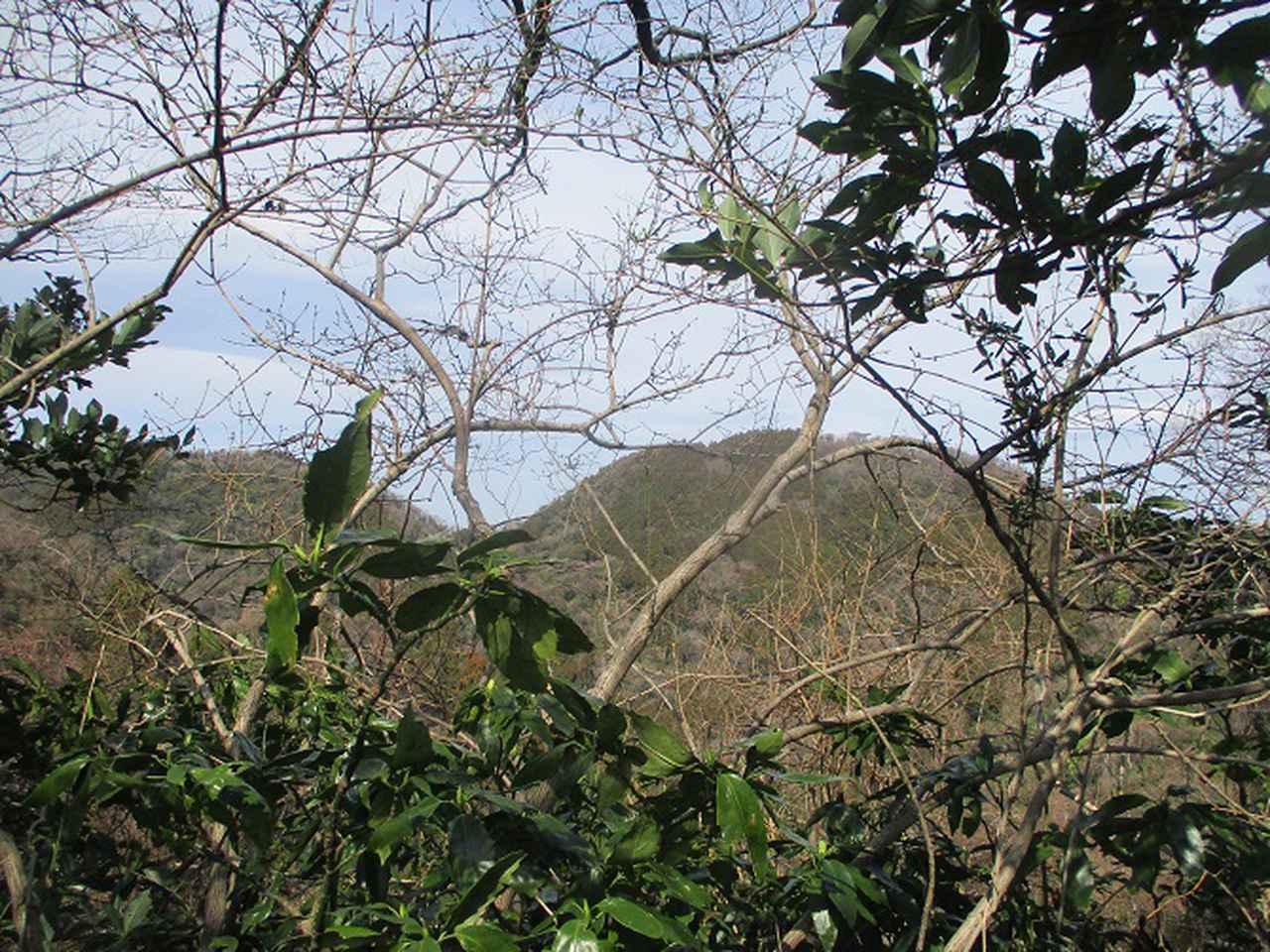 画像8: 2月22日に山旅会 仙元山から茅塚 ツアーに行ってきました!