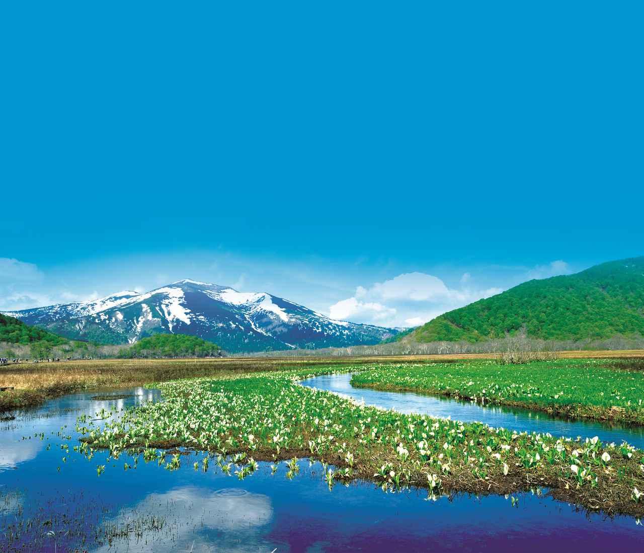 画像: 湿原のため季節により様々な花が咲きます