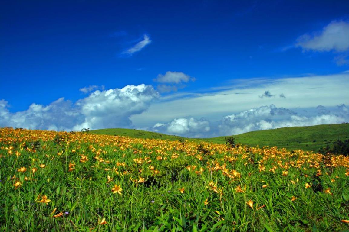 画像: ニッコウキスゲ咲く霧ヶ峰