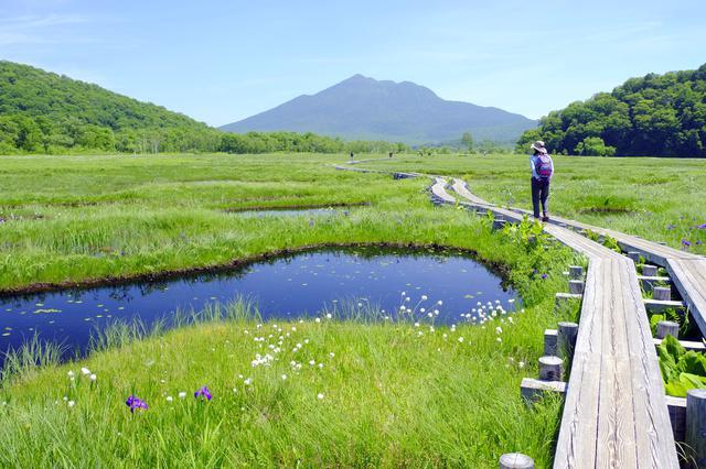 画像: 尾瀬ヶ原の木道