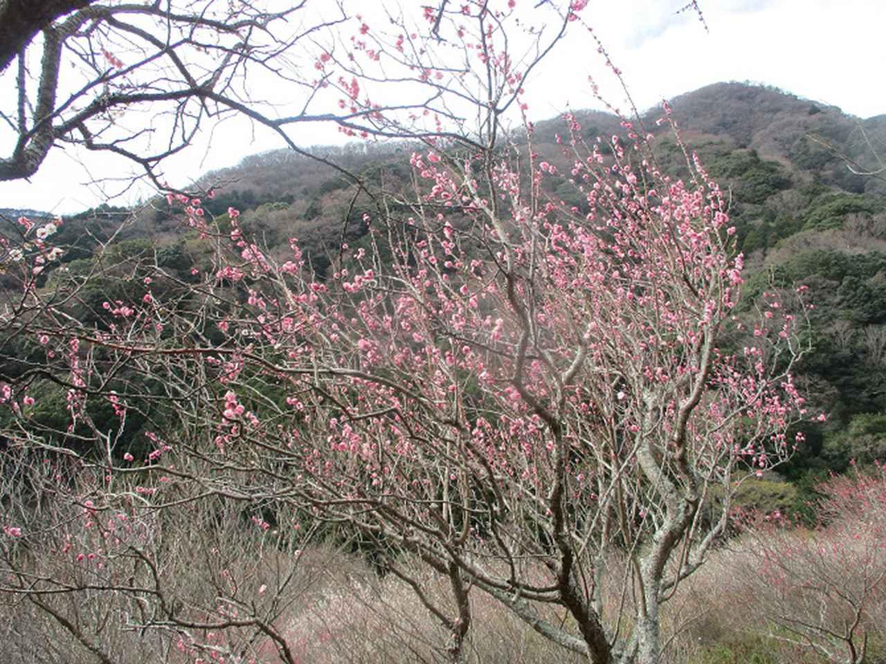 画像1: 2月28日に山旅会 湯河原城山 ツアーに行ってきました!
