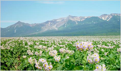 画像: 十勝岳【とかちだけ】北海道