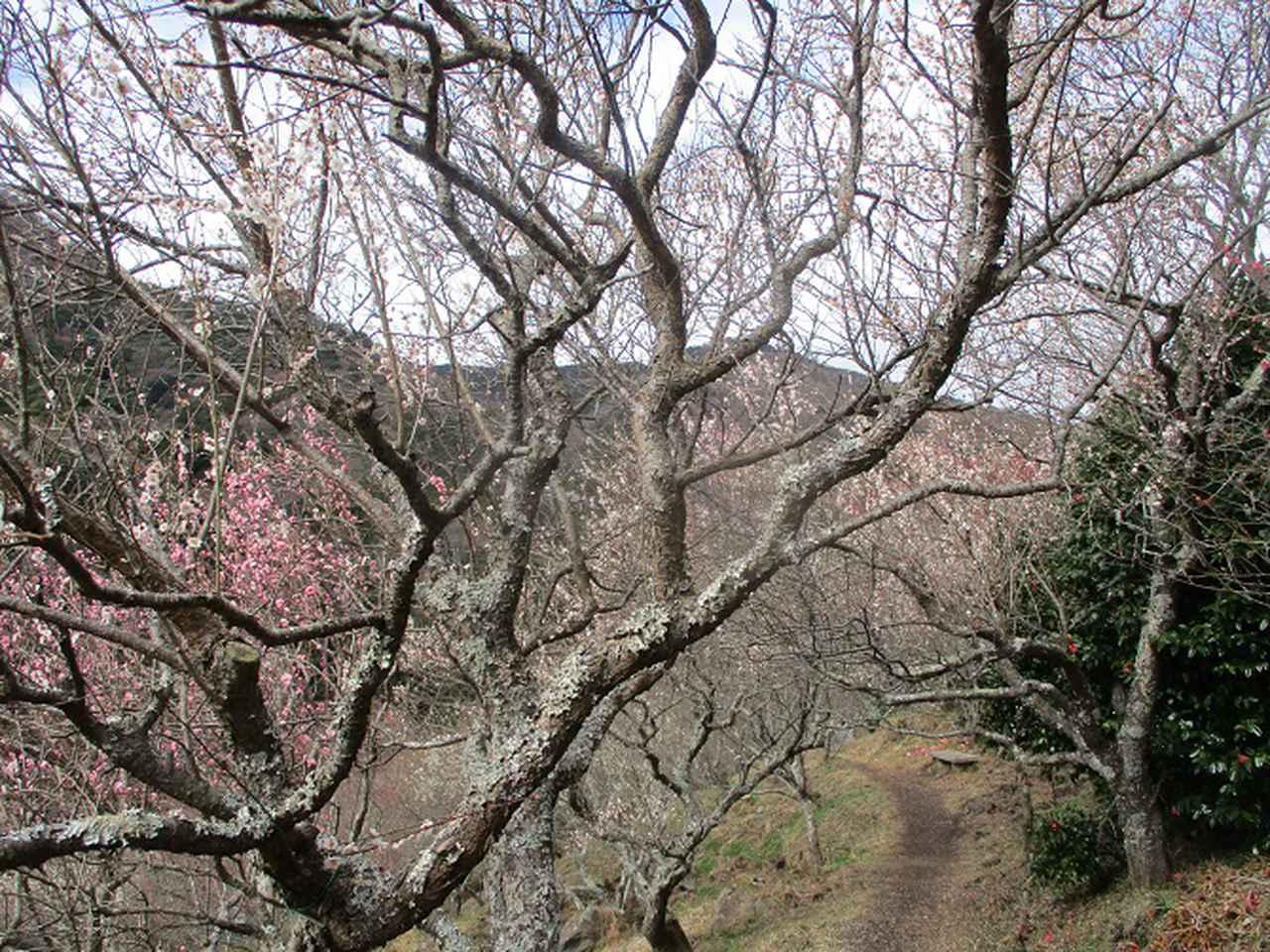 画像2: 2月28日に山旅会 湯河原城山 ツアーに行ってきました!