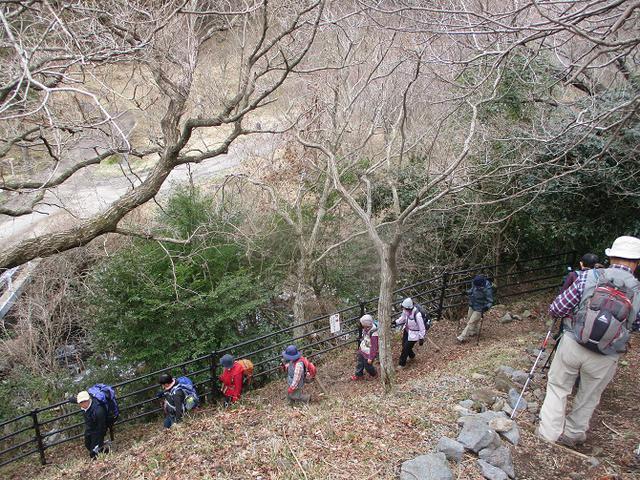 画像3: 2月28日に山旅会 湯河原城山 ツアーに行ってきました!
