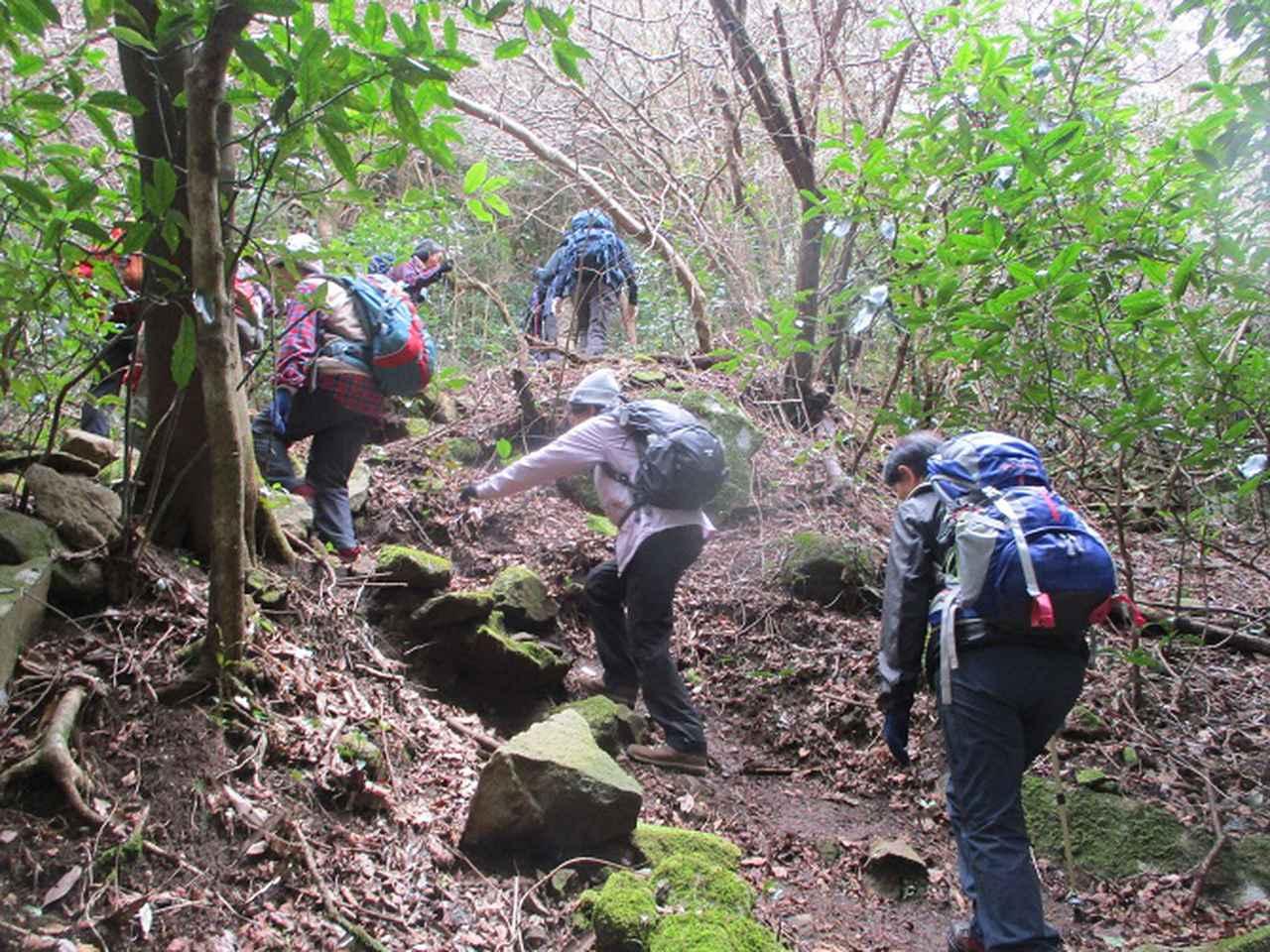 画像4: 2月28日に山旅会 湯河原城山 ツアーに行ってきました!