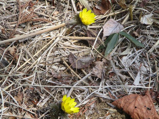 画像4: 来年春の企画素材を探して埼玉県小鹿野町の四阿屋山あたりを歩いてみました!