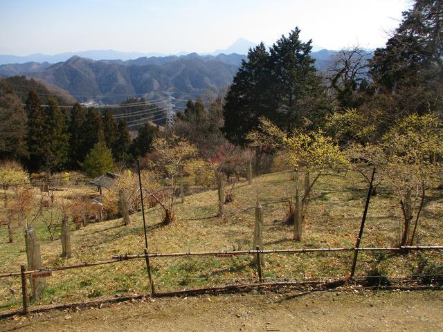 画像2: 来年春の企画素材を探して埼玉県小鹿野町の四阿屋山あたりを歩いてみました!