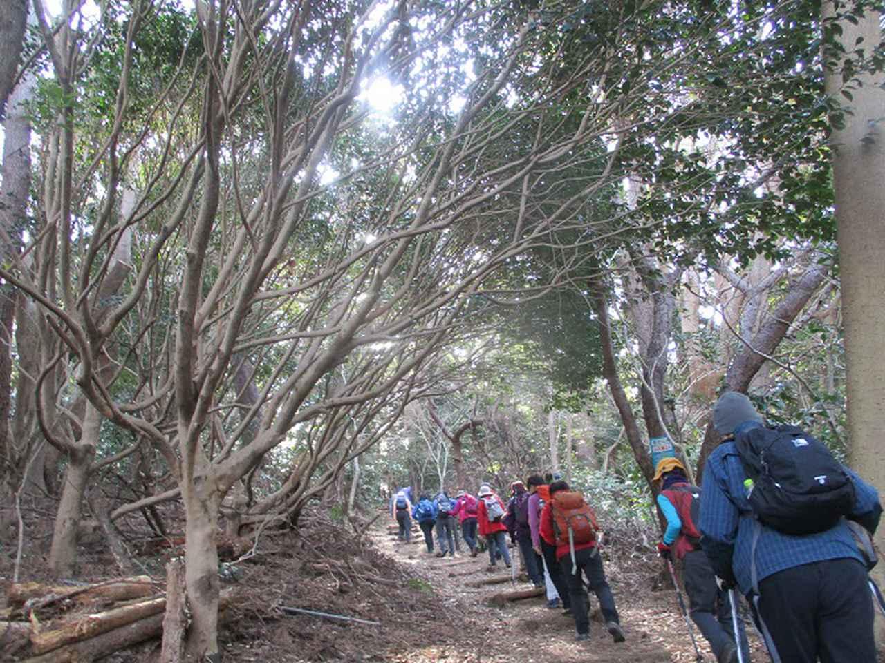 画像1: 岡田ガイドのハイキングコースで、 真鶴半島 へ行ってきました♪