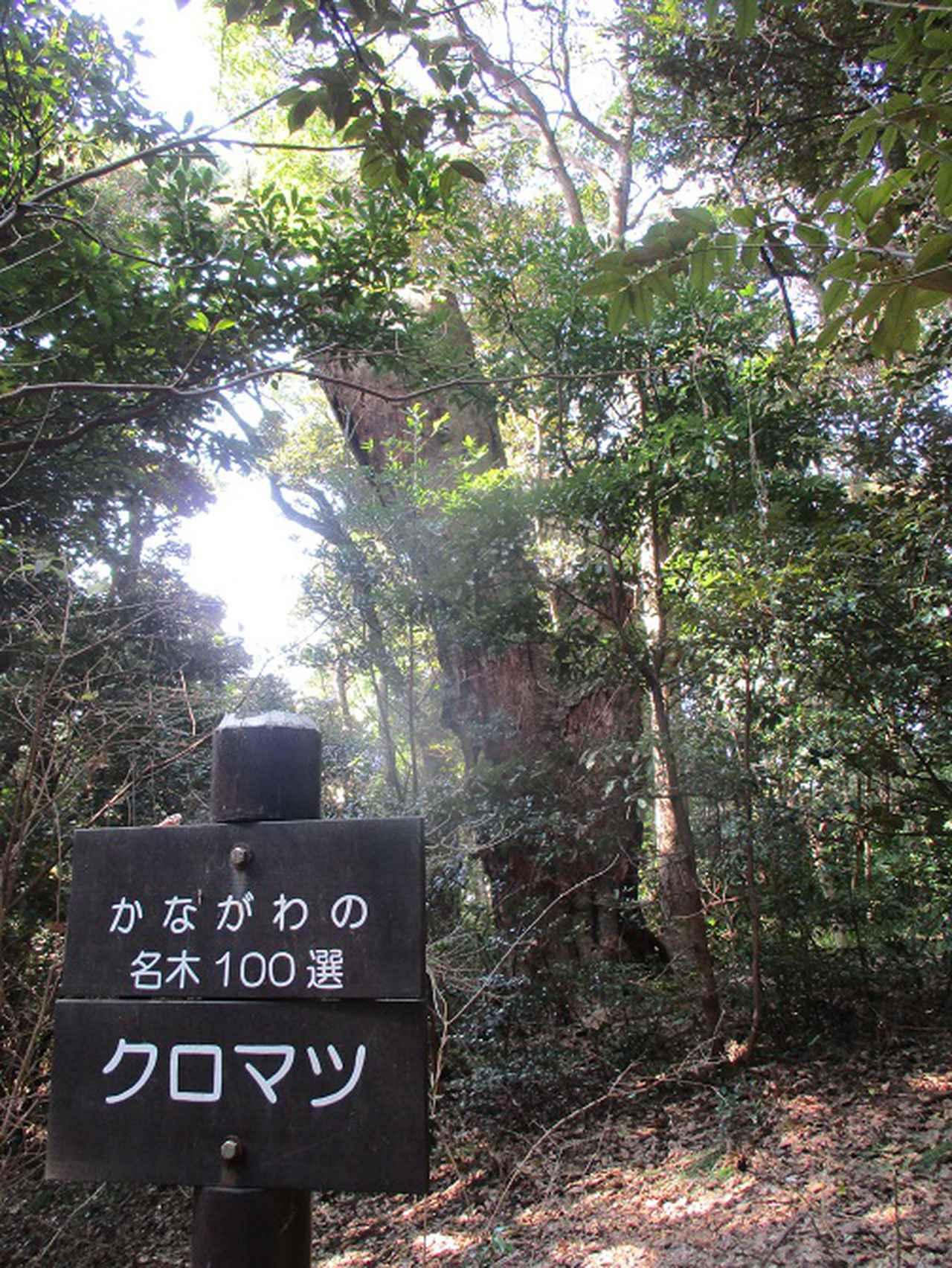 画像2: 岡田ガイドのハイキングコースで、 真鶴半島 へ行ってきました♪