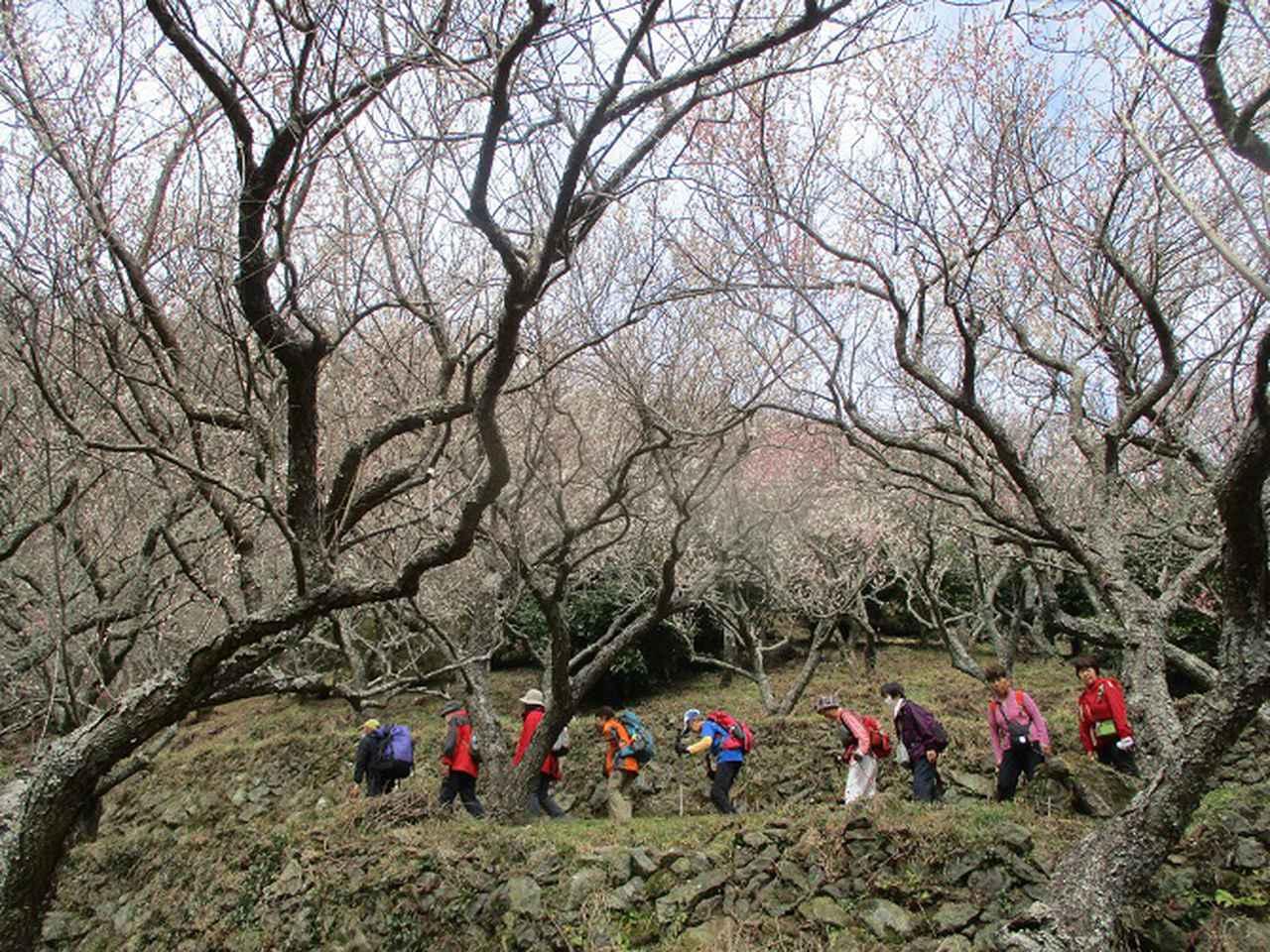 画像12: 岡田ガイドのハイキングコースで、 真鶴半島 へ行ってきました♪