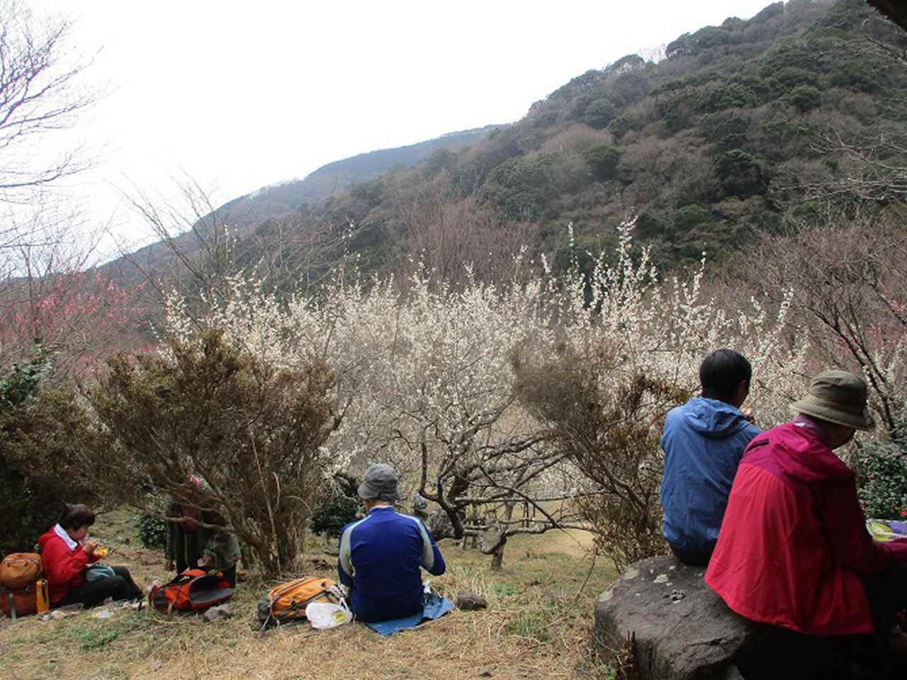 画像13: 岡田ガイドのハイキングコースで、 真鶴半島 へ行ってきました♪