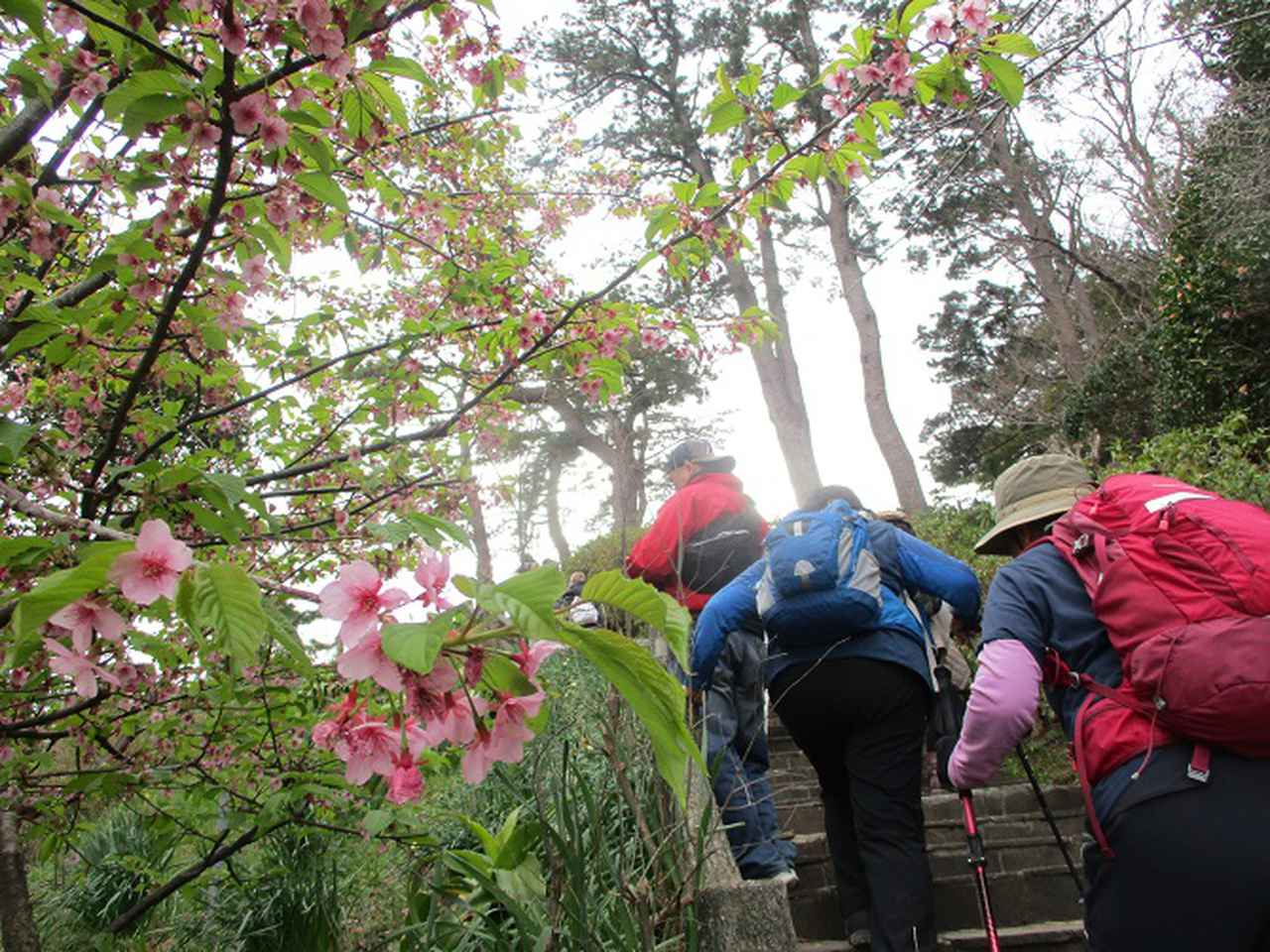 画像6: 岡田ガイドのハイキングコースで、 真鶴半島 へ行ってきました♪