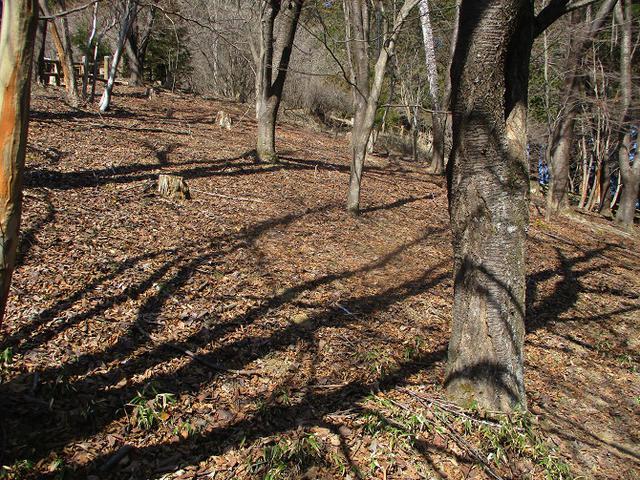 画像3: 来年春の企画素材を探して埼玉県小鹿野町の四阿屋山あたりを歩いてみました!