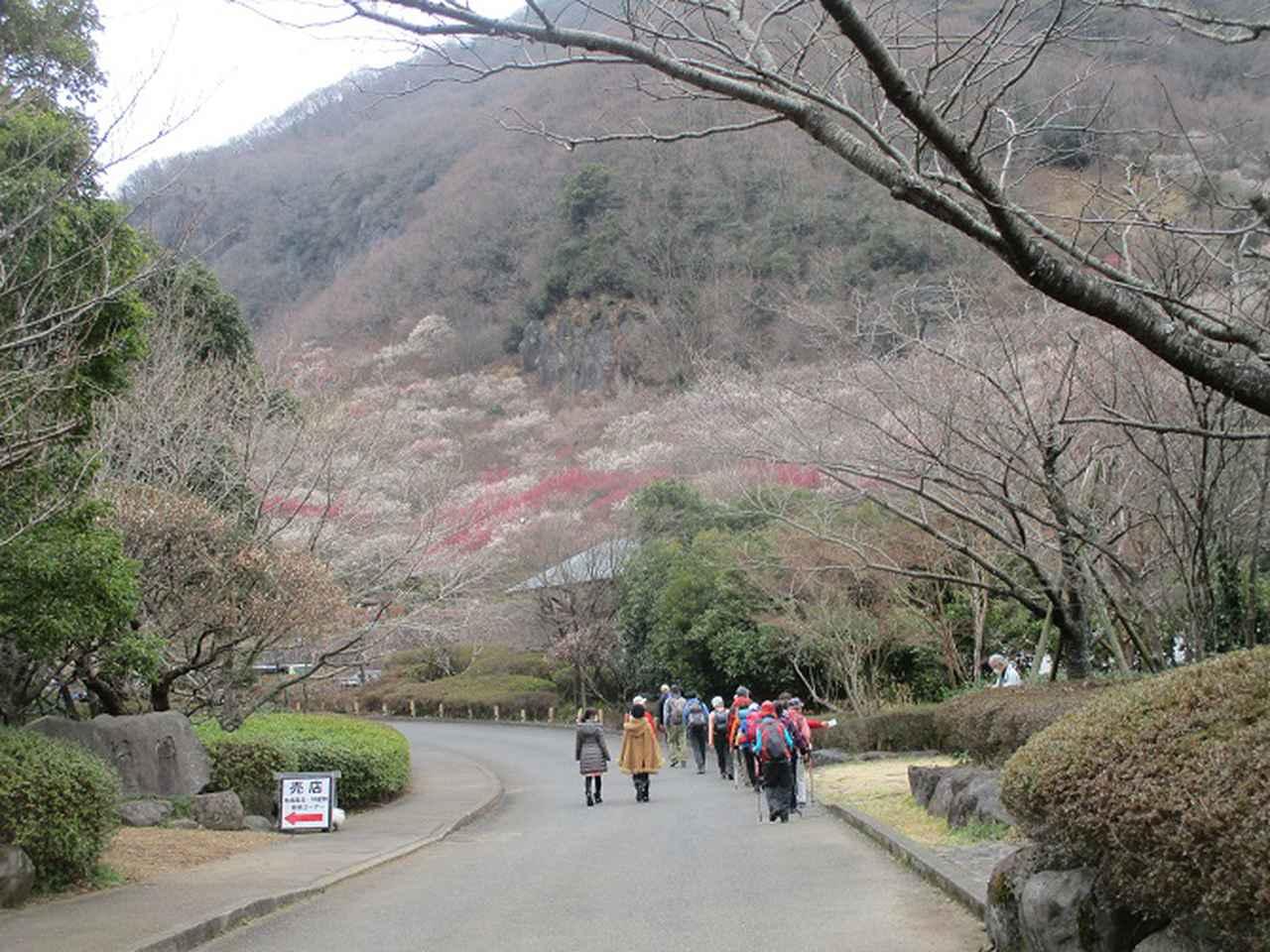 画像11: 岡田ガイドのハイキングコースで、 真鶴半島 へ行ってきました♪