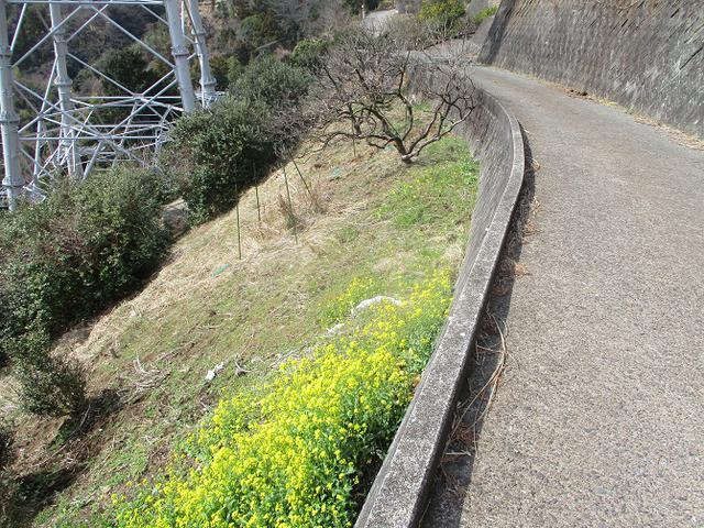 画像13: 3月の山旅会 高松山 の下見に行ってきました!