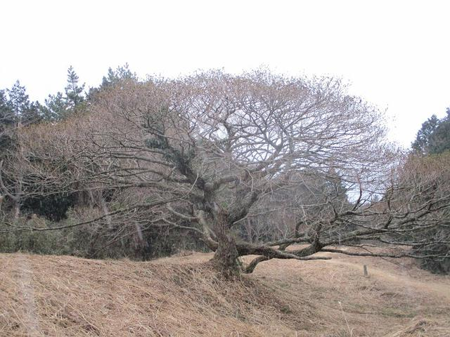 画像9: 3月の山旅会 岩戸山 の下見に行ってきました!