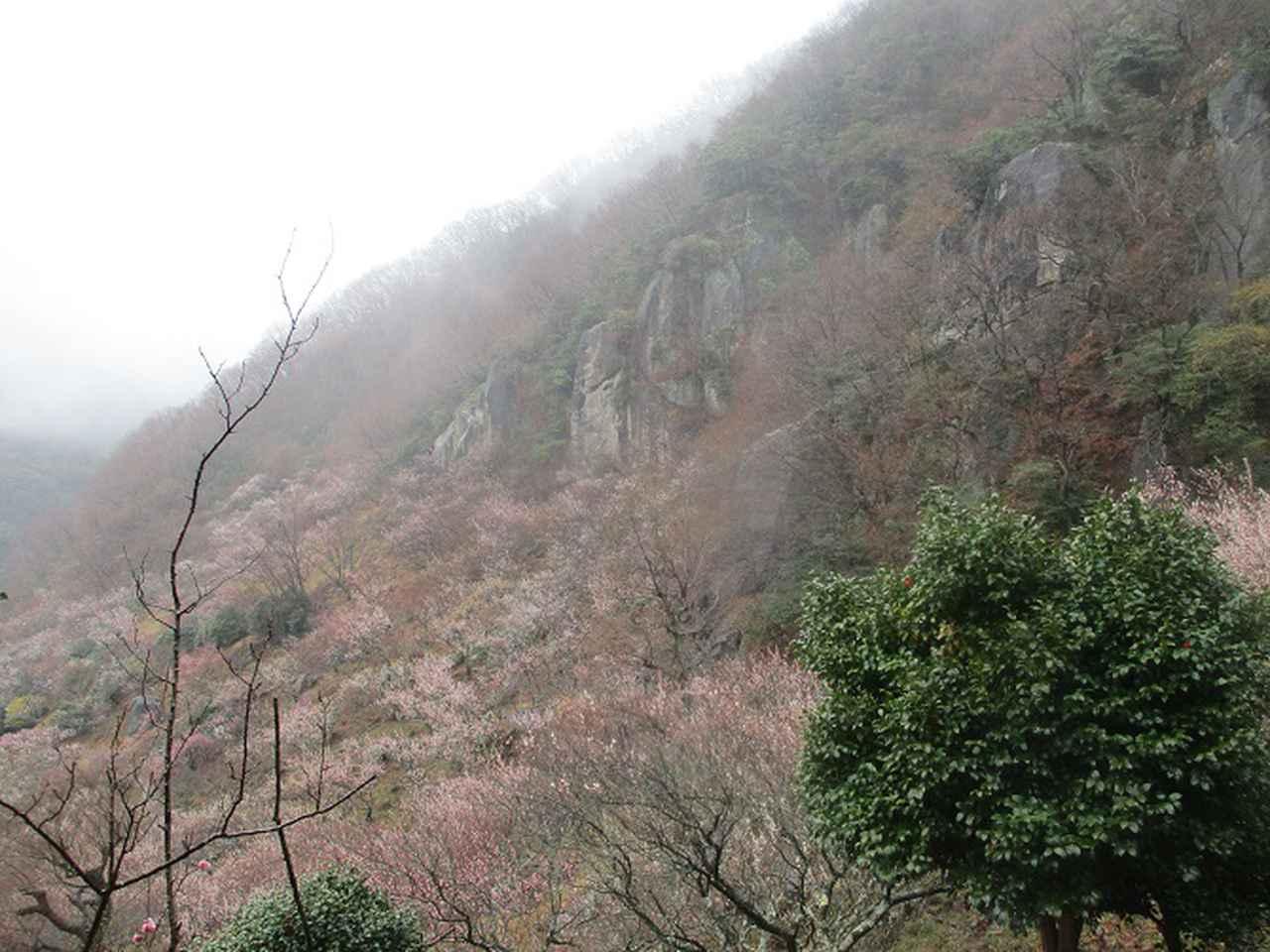 画像9: 3月2日に山旅会 幕山と南郷山 ツアーに行ってきました!