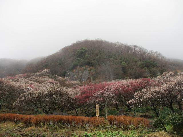 画像11: 3月2日に山旅会 幕山と南郷山 ツアーに行ってきました!