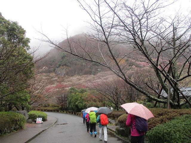 画像1: 3月2日に山旅会 幕山と南郷山 ツアーに行ってきました!