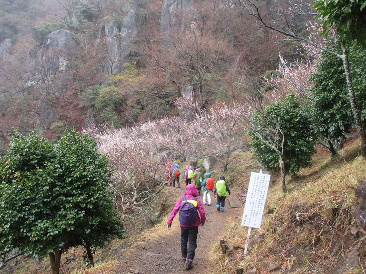 画像10: 3月2日に山旅会 幕山と南郷山 ツアーに行ってきました!