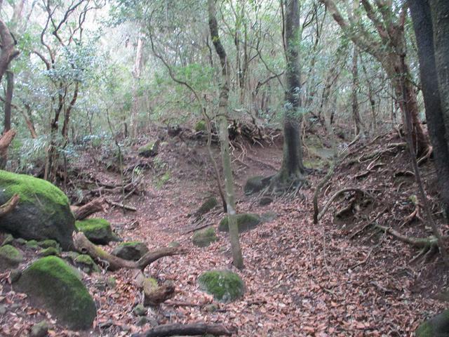 画像2: 3月の山旅会 岩戸山 の下見に行ってきました!