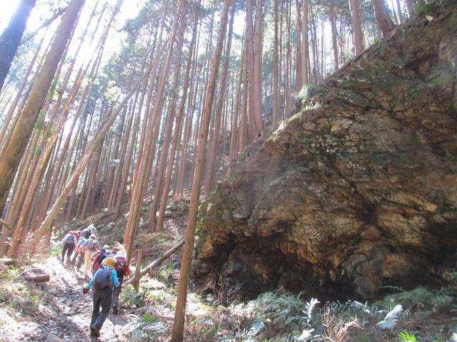 画像5: 3月3日に山旅会 堂上セツブンソウと破風山 のツアーに行ってきました!
