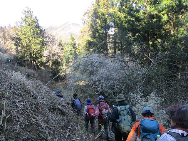 画像8: 3月3日に山旅会 堂上セツブンソウと破風山 のツアーに行ってきました!