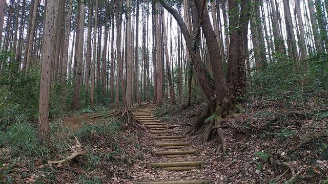 画像2: 3月の山旅会 仙元山から嵐山渓谷 ツアーの下見に行ってきました!