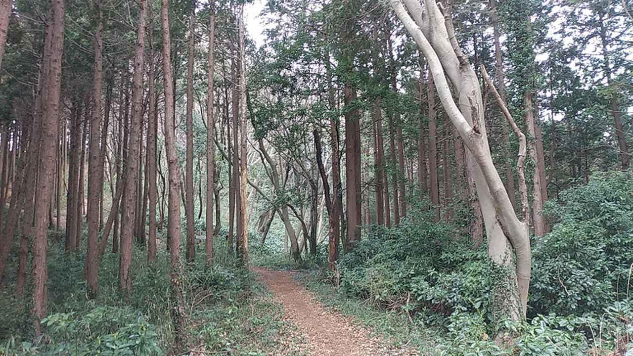 画像4: 3月の山旅会 仙元山から嵐山渓谷 ツアーの下見に行ってきました!