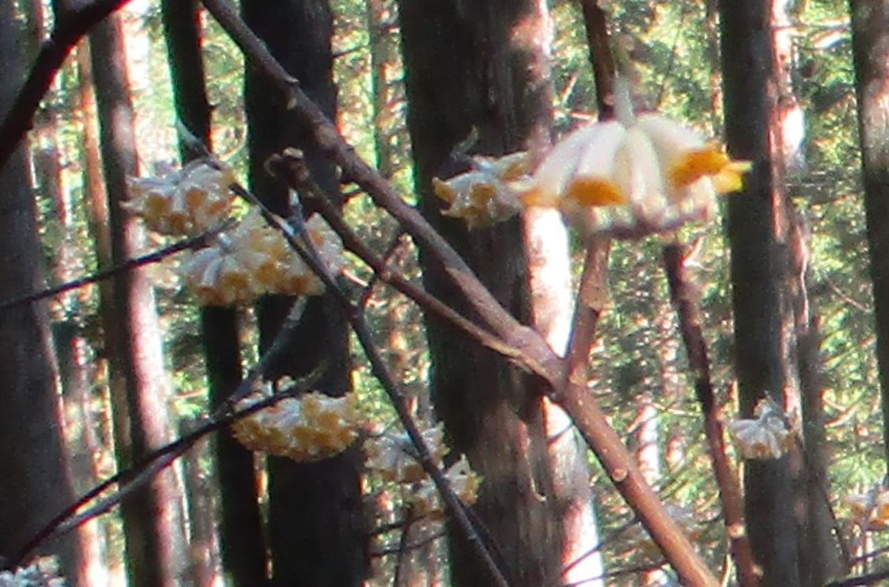 画像6: 3月9日に山旅会 高松山 ツアーに行ってきました!