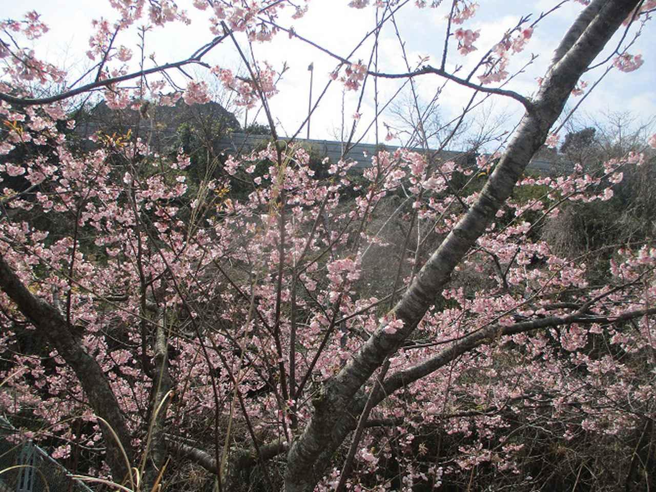画像7: 3月7日に山旅会 大楠山から衣笠城跡 ツアーに行ってきました!