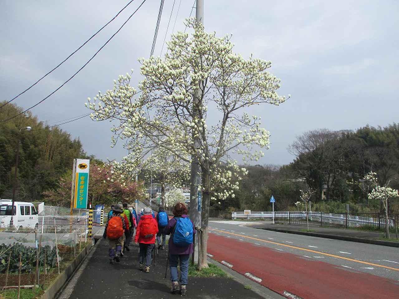画像6: 3月7日に山旅会 大楠山から衣笠城跡 ツアーに行ってきました!