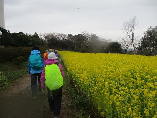 画像3: 3月7日に山旅会 大楠山から衣笠城跡 ツアーに行ってきました!