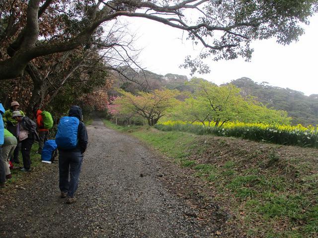 画像1: 3月7日に山旅会 大楠山から衣笠城跡 ツアーに行ってきました!