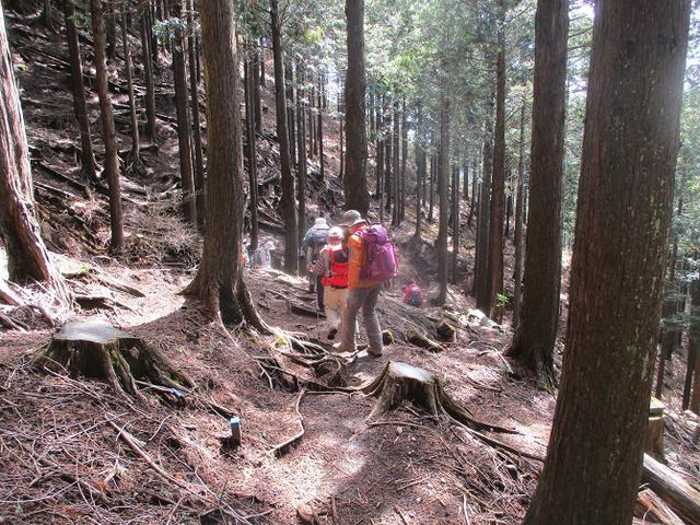 画像8: 3月9日に山旅会 高松山 ツアーに行ってきました!