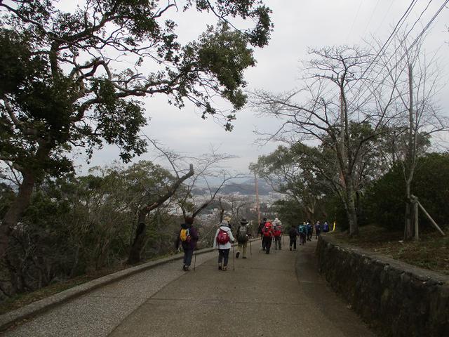 画像10: 3月7日に山旅会 大楠山から衣笠城跡 ツアーに行ってきました!