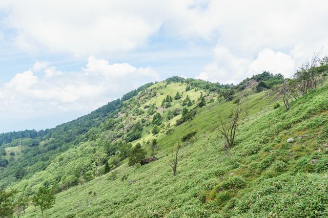 画像: 大菩薩嶺の稜線