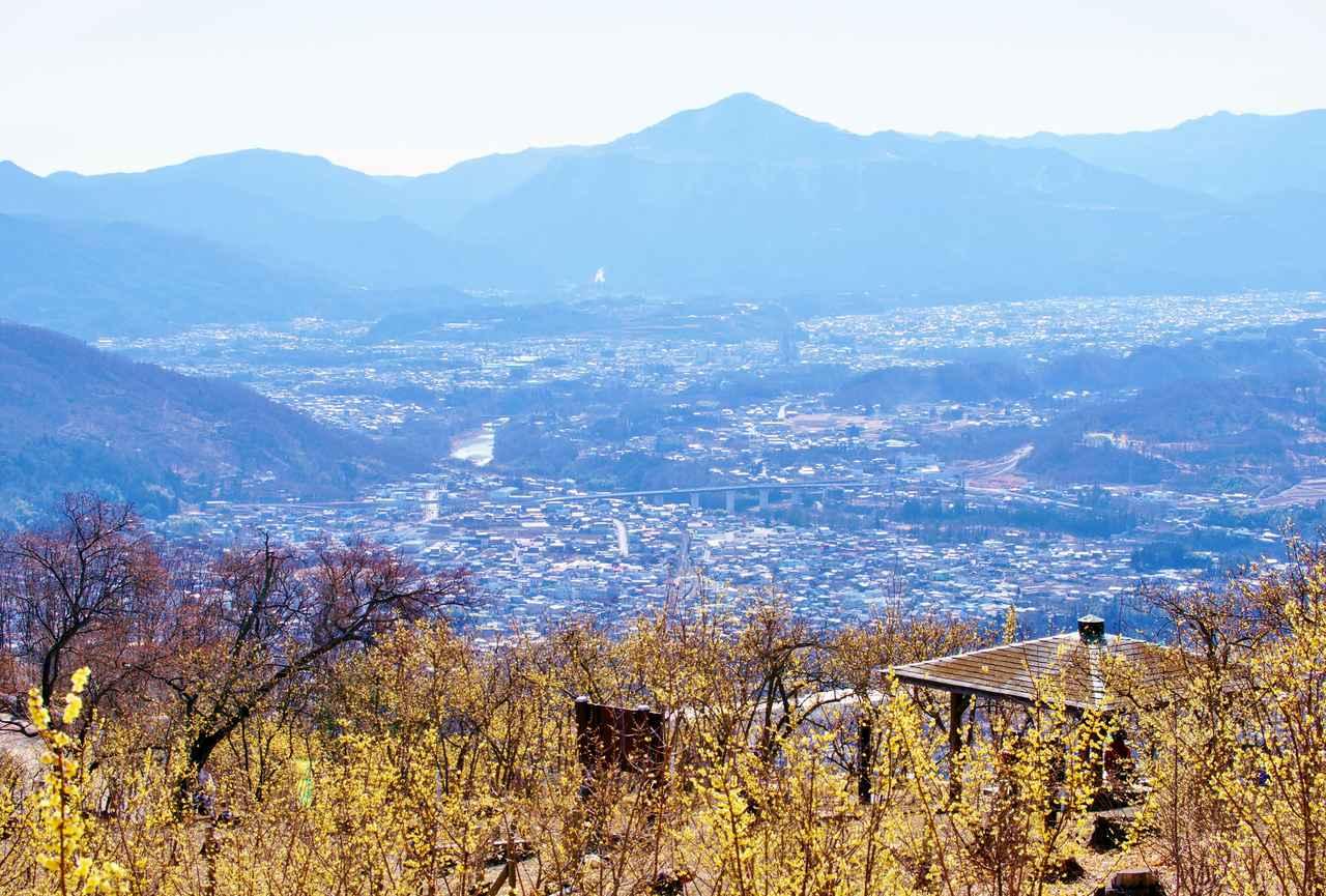 画像: 黄色いロウバイの咲く宝登山