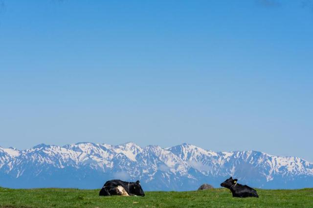 画像: 美ヶ原牧場