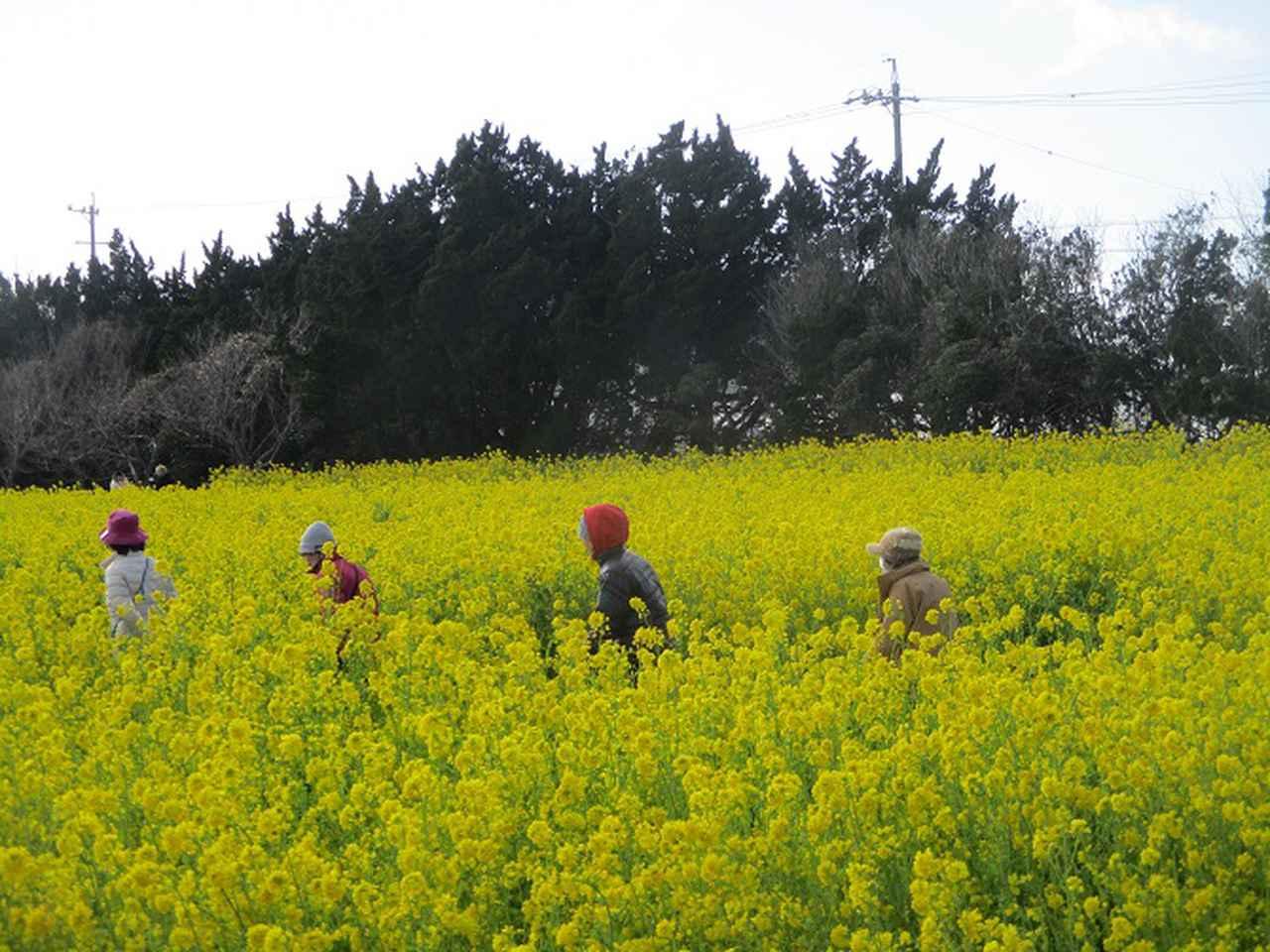 画像16: 3月5日から山旅会 「田原アルプスと神石山」 ツアーに行ってきました!