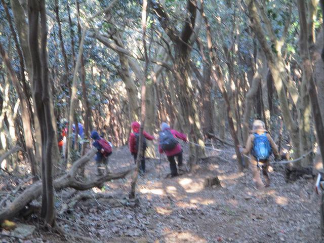 画像7: 3月5日から山旅会 「田原アルプスと神石山」 ツアーに行ってきました!